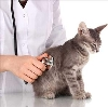 Ветеринарные клиники в Сараях